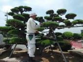 yjimage植木