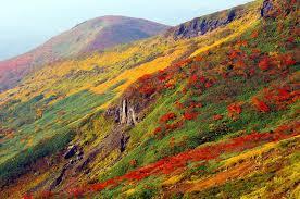 yjimag紅葉の山e
